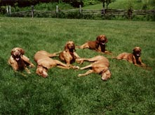Bird dogs relaxing at Ruffed Grouse lodge in Phillips Wisconsin